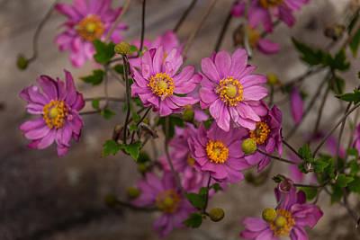 Photograph - Pink Splendid by Gene Hilton