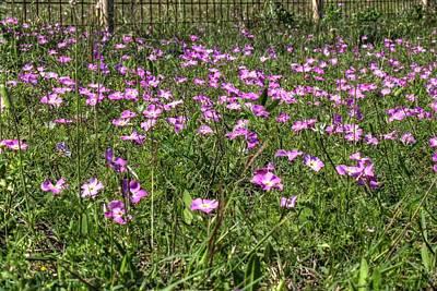 Pink Spring Flowers Art Print