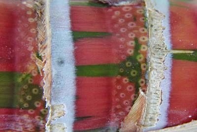 Pink Sugarcane 3 Art Print