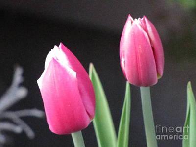 Photograph - Pink Tulips by Serena Ballard