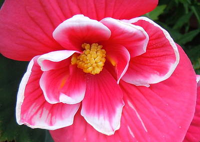 Photograph - Pink Up Close by Julie Williams