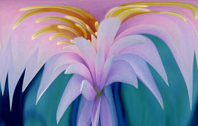 Pink Water Lily Print by Pat Exum