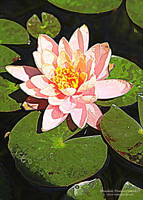 Photograph - Pink Water Lily by Randall Thomas Stone