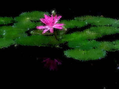 Photograph - Pink Water Lily With Reflection by Chua  ChinLeng