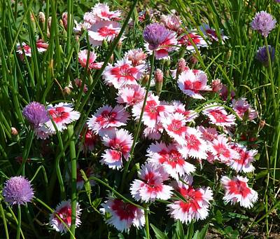 Pinks In The Clover Grass Art Print by Jeanette Oberholtzer