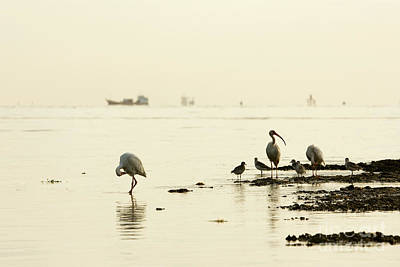 Sunrise Photograph - Pipers Ibises And Tankers by Matt Tilghman