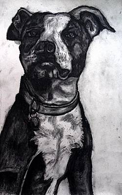 Painting - Pit Bull by Andrew Hench