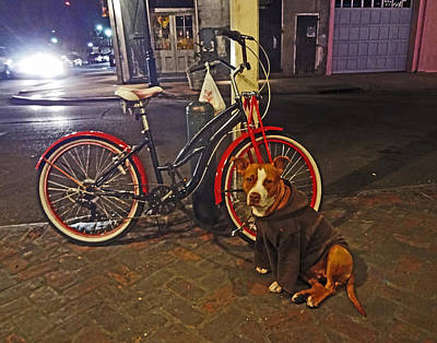Pit Bull In A Hoodie In The French Quarter Of New Orleans Art Print