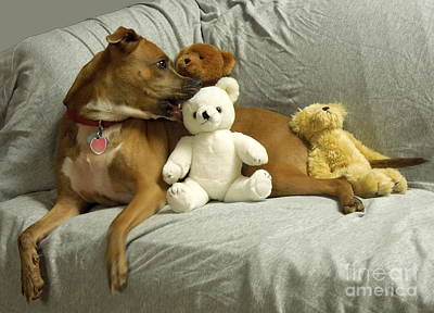 Pit Bull With Her Teddy Bears Art Print by Renee Trenholm