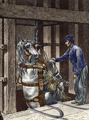 Pit Pony Print by Sheila Terry