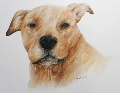 Pitbull Drawing - Pitbull Head Study by Meagan  Visser