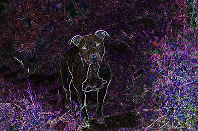 Pitty In Purple  Print by Travis Crockart