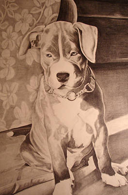 Pitty Pet Portrait Art Print by Yvonne Scott