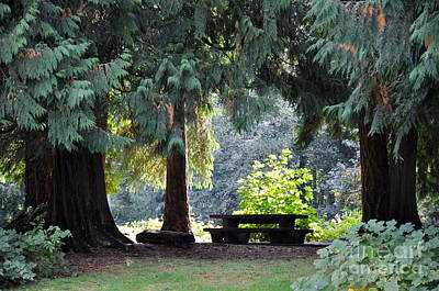 Pacific Northwest Photograph - Place For A Picnic   6 by Tanya  Searcy