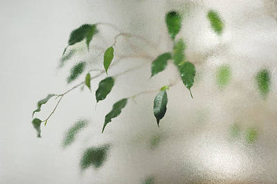 Photograph - Plant Behind Glass by Matthias Hauser