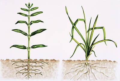 Plant Comparison Art Print by Lizzie Harper