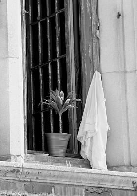 Photograph - Plant On A Window Sill by Scott Brown
