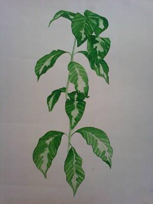 Plant Art Print by Shilpa V N