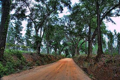 Photograph - Plantation Road by Jan Amiss Photography
