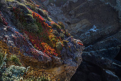Photograph - Plants And Rock by Roger Mullenhour