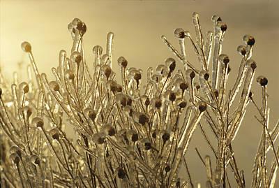 Plants Encased In Ice Art Print