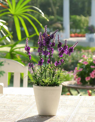 Photograph - Plastic Lavender Flowers  by Nawarat Namphon