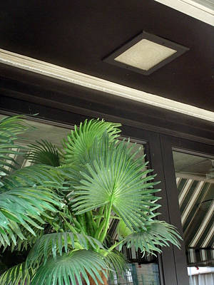 Art Print featuring the photograph Plastic Palms And Striped Awnings by Louis Nugent