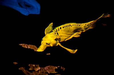 Platypus Fish Art Print by Chua  ChinLeng