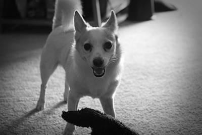 Best Friend Photograph - Play Boy by Mandy Shupp