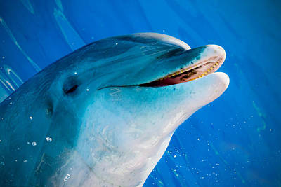 Manatee Co Photograph - Play Time by Nicholas Evans