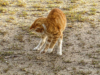 Photograph - Playful Yellow Kitty by Debbie Portwood