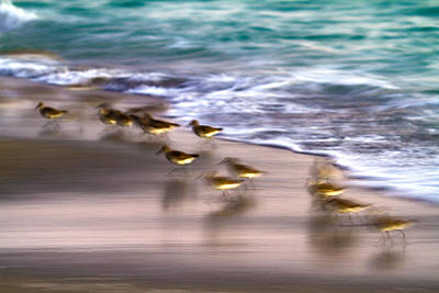 Sandpiper Wall Art - Photograph - Playing Pipers by Betsy Knapp