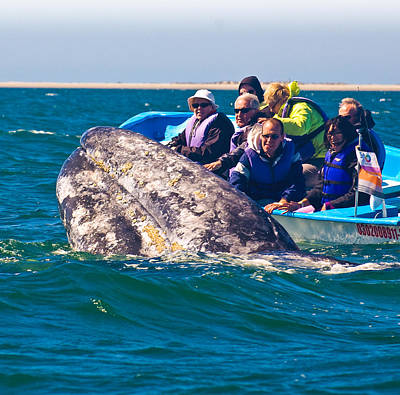 Whales Photograph - Pleased To Meet You by Don Schwartz