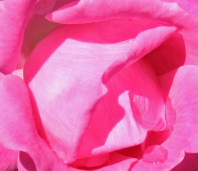 Pleasingly Pink Art Print by Karen Harrison