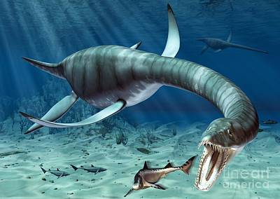 Fish Underwater Drawing - Plesiosaur Attack by Roger Harris and Photo Researchers
