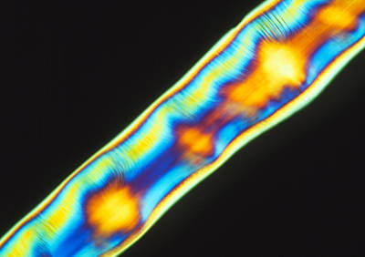 Polymer Photograph - Plm Of A Synthetic Liquid Crystal Polymer Fibres by