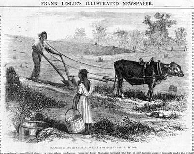 Plowing In South Carolina.  African Art Print by Everett