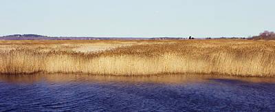 Photograph - Plum Island Marsh by Frank Winters