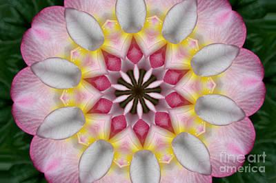 Plumeria 3 Art Print