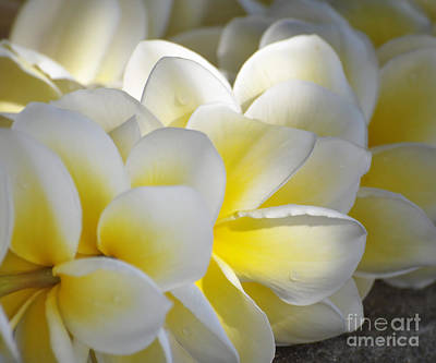 Plumeria Flower Lei Art Print