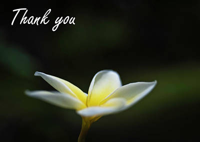 Photograph - Plumeria Thank You Card by Dan McManus
