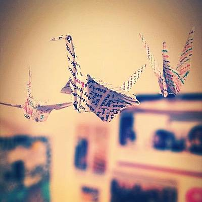 Poetry Photograph - Poetry Cranes by Cassie OToole