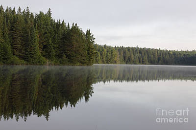 Photograph - Pog Lake Tree Line by Chris Hill
