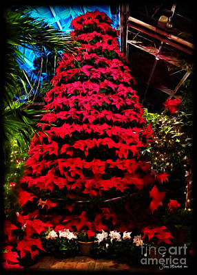 Photograph - Poinsettia Tree by Joan  Minchak