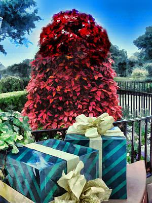Photograph - Poinsettia Tree by Nora Martinez