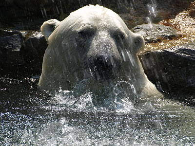 Photograph - Polar Bear 3 by Jeffrey Peterson