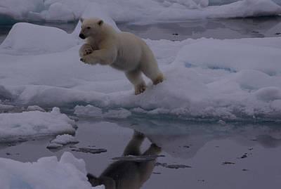 Polar Bear Leaping Over A Gap In Arctic Art Print