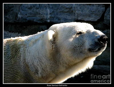 Roses Photograph - Polar Bear With Watercolor Effect by Rose Santuci-Sofranko