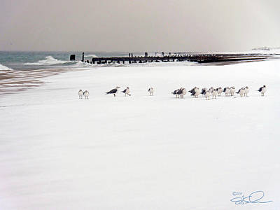 Polar Bird Club Art Print