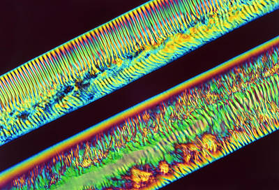 Polymer Photograph - Polarised Light Micrograph Of Polymer Filaments by R.e. Litchfield
